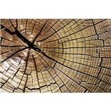 Vliesové fototapety letokruhy kmene rozměr 375 cm x 250 cm