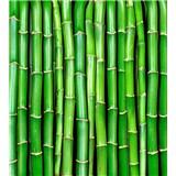 Vliesové fototapety bambus rozměr 225 cm x 250 cm