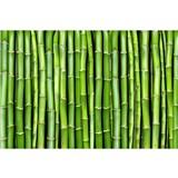 Vliesové fototapety bambus rozměr 375 cm x 250 cm