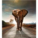 Vliesové fototapety slon rozměr 225 cm x 250 cm