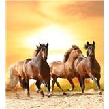 Vliesové fototapety koně při západu slunce rozměr 225 cm x 250 cm