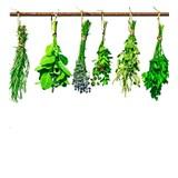 Vliesové fototapety bylinky rozměr 225 cm x 250 cm