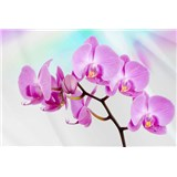 Vliesové fototapety orchidej rozměr 312 cm x 219 cm