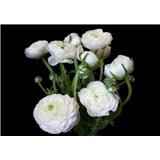 Vliesové fototapety bílé květy na černém pozadí rozměr 368 cm x 254 cm