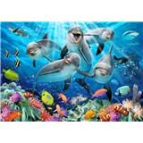 Vliesové fototapety selfie delfíni rozměr 368 cm x 254 cm