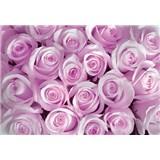 Vliesové fototapety růžové růže rozměr 312 cm x 219 cm