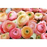 Fototapety květy růže rozměr 368 cm x 254 cm