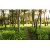 Vliesové fototapety Hefele květinová magie lesa, rozměr 450 cm x 280 cm