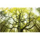Vliesové fototapety Hefele strom snů II, rozměr 450 cm x 280 cm