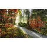 Vliesové fototapety Hefele podzimní lesní stezka, rozměr 450 cm x 280 cm
