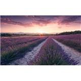 Vliesové fototapety Hefele levandulový sen, rozměr 450 cm x 280 cm