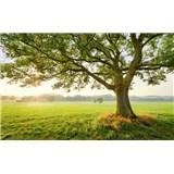 Vliesové fototapety Hefele magický strom, rozměr 450 cm x 280 cm