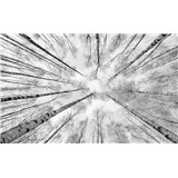 Vliesové fototapety Hefele kmeny bříz, rozměr 450 cm x 280 cm