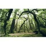 Vliesové fototapety Hefele starověké kmeny stromů, rozměr 450 cm x 280 cm