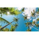 Vliesové fototapety Hefele kokosové nebe, rozměr 450 cm x 280 cm