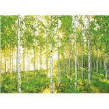 Fototapety les břízy rozměr 368 cm x 254 cm