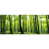 Vliesové fototapety les rozměr 250 cm x 104 cm