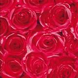 Samolepící tapety růže červené 45 cm x 15 m