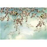 Fototapety Sakura rozměr 368 cm x 254 cm