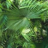 Vliesové tapety na zeď NEUE BUDE 2.0 palmové listy