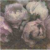 Vliesové tapety IMPOL New Wall květy velké bílo-fialové