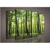 Obraz na plátně les 150 x 100 cm