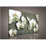Obraz na plátně bílá orchidej na kameni 75 x 100 cm