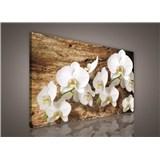 Obraz na plátně bílá orchidej na dřevě 75 x 100 cm