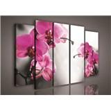 Obraz na plátně orchidej 150 x 100 cm