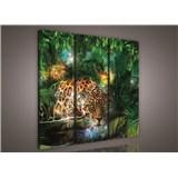 Obraz na plátně jaguár v džungli 90 x 80 cm