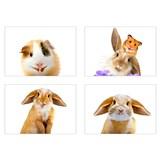 Samolepky na zeď selfie morče a králíček rozměr 45 x 65 cm