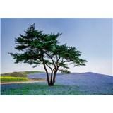Vliesové fototapety strom v poli v Japonsku rozměr 368 cm x 254 cm