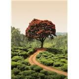 Fototapety červený strom na Srí Lance rozměr 184 cm x 254 cm