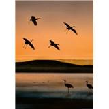Fototapety ptáci při západu slunce rozměr 184 cm x 254 cm