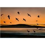 Vliesové fototapety ptáci při západu slunce rozměr 368 cm x 254 cm