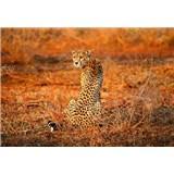 Fototapety leopard rozměr 368 cm x 254 cm