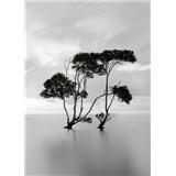 Fototapety stromy ve stojaté vodě rozměr 184 cm x 254 cm