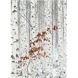 Vliesové fototapety březový les rozměr 184 cm x 254 cm