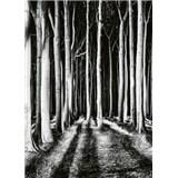 Vliesové fototapety tajemný les rozměr 184 x 254 cm