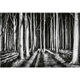 Fototapety tajemný les rozměr 368 cm x 254 cm