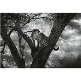 Fototapety leopard na stromě rozměr 368 cm x 254 cm