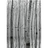 Fototapety březový les ve vodě rozměr 184 cm x 254 cm
