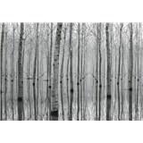 Fototapety březový les ve vodě rozměr 368 x 254 cm