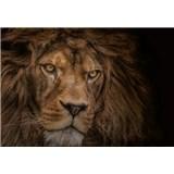 Fototapety lev rozměr 368 cm x 254 cm