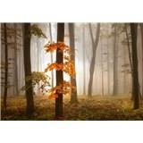 Fototapety podzimní les v mlze rozměr 368 cm x 254 cm