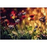 Vliesové fototapety květiny a světlo rozměr 368 cm x 254 cm
