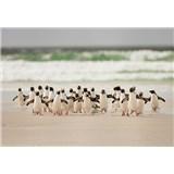 Vliesové fototapety tučňáci rozměr 368 cm x 254 cm