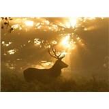 Vliesové fototapety jelen rozměr 368 cm x 254 cm