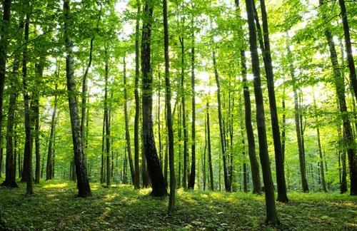 Výsledek obrázku pro les