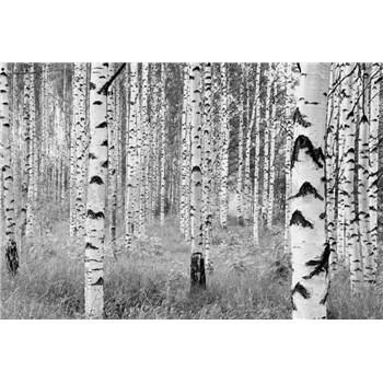 Vliesové fototapety břízy rozměr 368 cm x 248 cm
